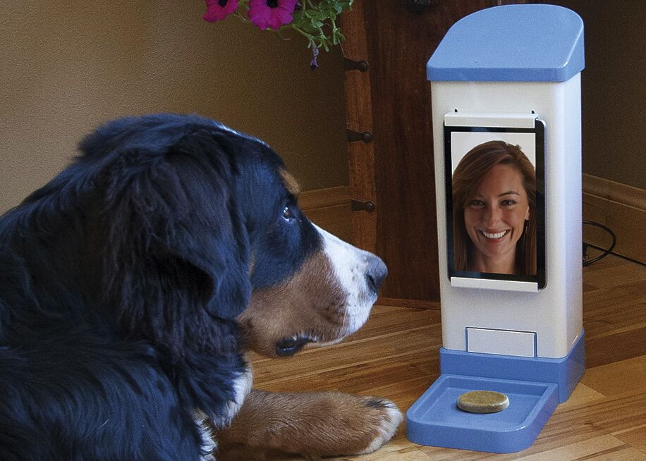 The Best Tech And Gadgets For Your Dog Uncubed